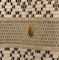 この蛾って毒はありますか?さっきトイレに行った際に飛び回って手に触れて不安です。