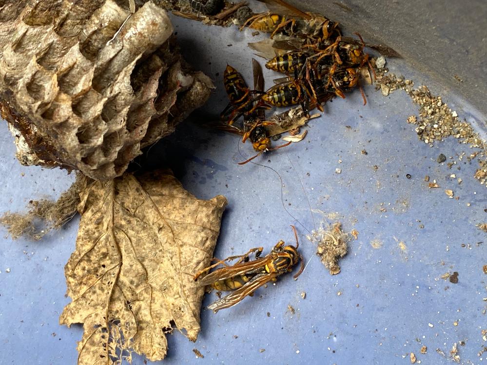 このハチは何という名前のハチですか?