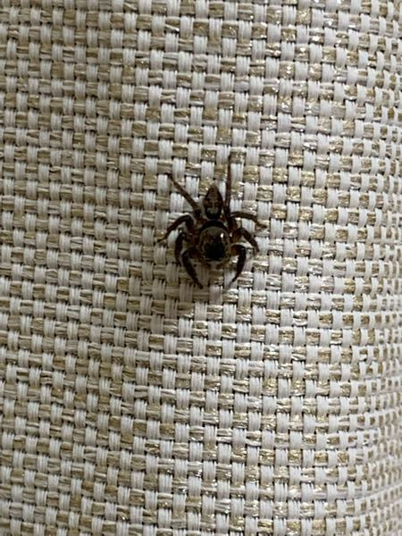 この蜘蛛は何ていう名前の蜘蛛ですか?