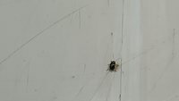 草刈りをしたあとに大量出現した虫  草刈りをしたあとから、急に虫が増えました。 虫の名前や駆除の必要性方法などご存じの方は教えて下さい。 5mmくらいの小さな硬めの虫です。