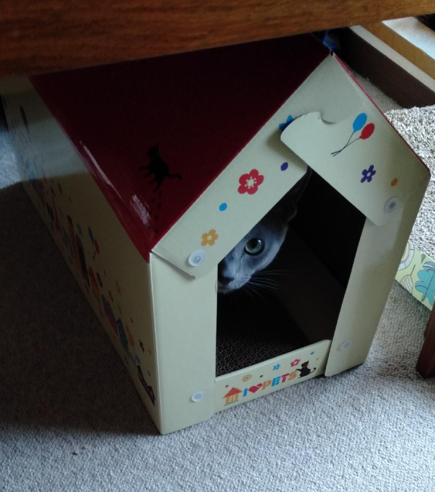 (ΦωΦ) いつも何かに監視されている気がします。視線のようなものを感じます。 気の所為でしょうか? 飼っている猫ちゃんが心配です。