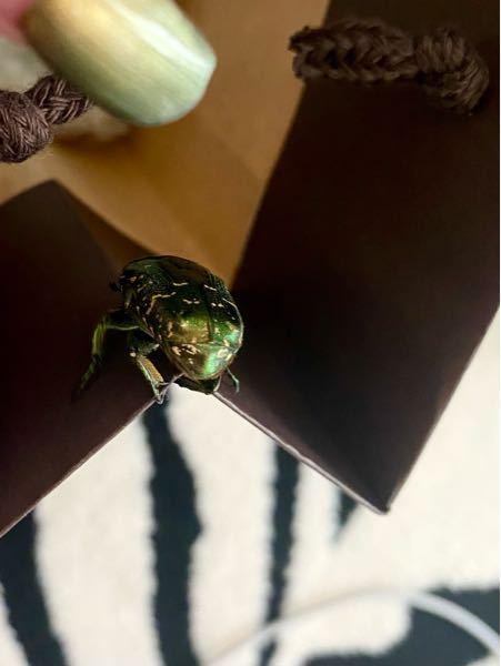 この虫はなんという虫ですか?ベランダから連れ込んだようです。室内にいました。マンション14階です。
