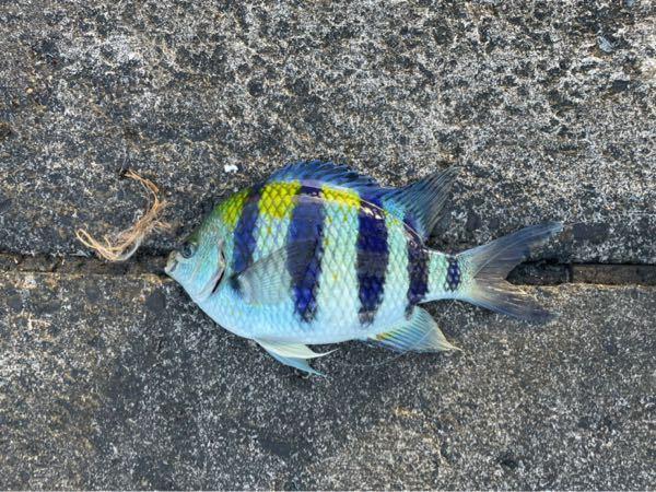 この魚の名前を教えてください。 また食べれる魚でしょうか?