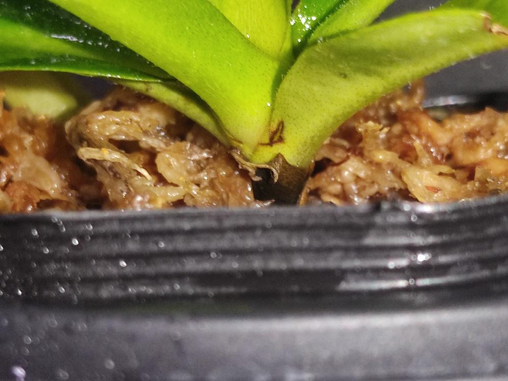 私の飼っている植物の根がこのようになっているのですが大丈夫なんでしょうか?