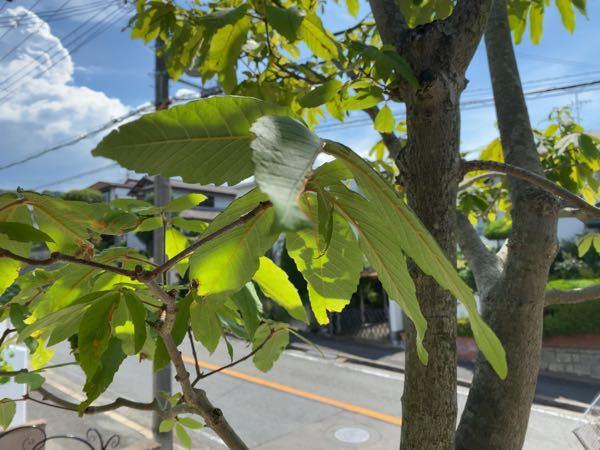 こんにちは。 これ何の木ですか?? どなたかよろしくお願いします。
