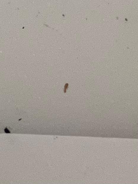 漫画を開くとでてきます。 この虫は何かわかりますか?