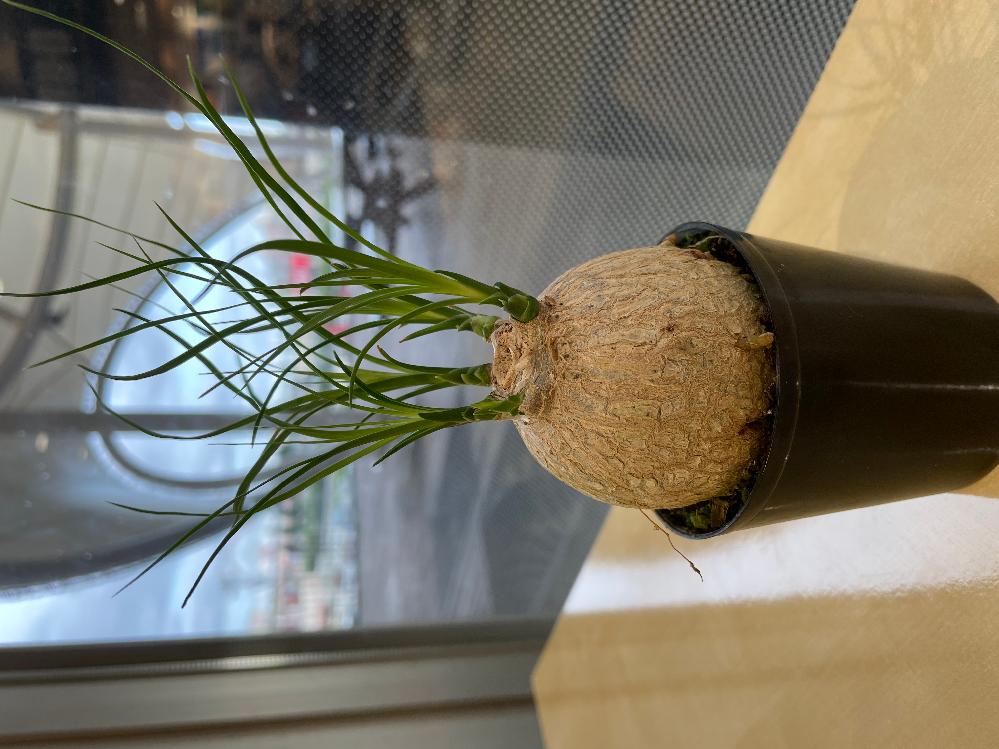 この植物の名前を教えて下さい。 また、育て方もご存知でしたら教えていただきたいです。よろしくお願いします。