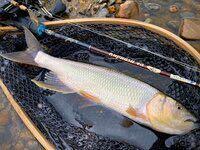 今日、琵琶湖にケタバスを釣りに行きました、鮎の大群もなくケタバス1匹しか釣れませんでした、琵琶湖のケタバスは秋まで釣れると聞いたのですが、シーズンはいつまでですか、40センチぐらいのケタバスが釣りたいで す。