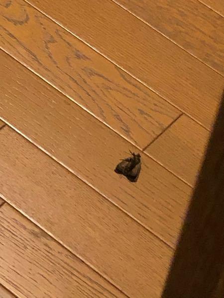 この虫は蛾ですか?