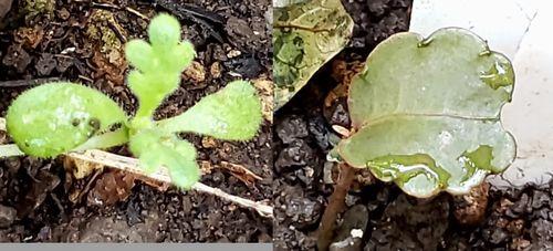 植えた覚えがない植物が庭にあります 名前を教えてください