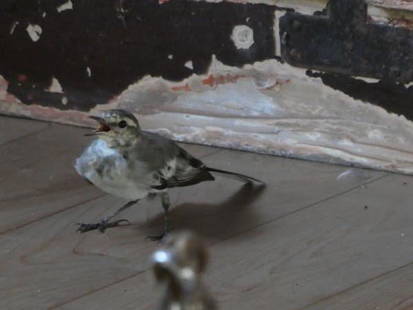 この小鳥の名前教えてください。