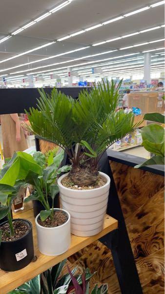 この写真の植物の名前を教えて下さい。よろしくお願いします。