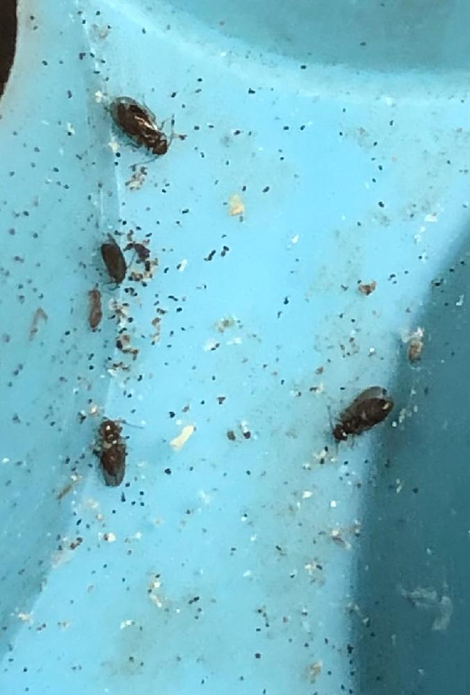 この虫は何ですか? わかる方教えて下さい。 よろしくお願いいたします!