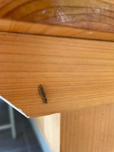 壁についていました。 なんの虫の卵でしょうか?お詳しい方、回答お待ちしております!