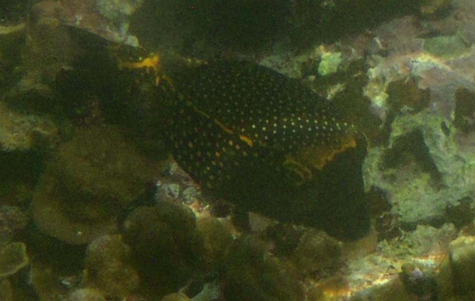 写真のお魚の名称を教えて下さい。 撮影地:大度海岸(沖縄本島)