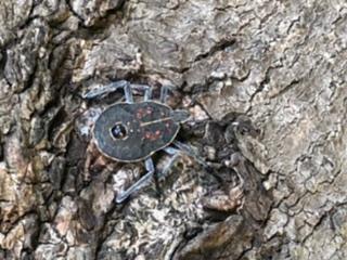 これななんて虫ですか?