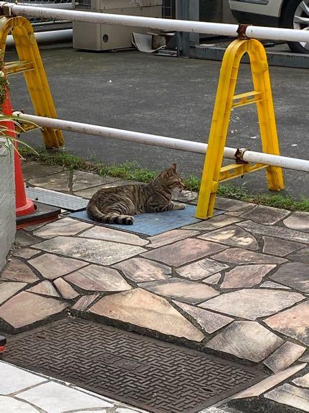 近所の可愛い可愛い野良猫ちゃんが口周りが濡れてて、口をぬっちゃぬっちゃしながら近づいてきたのですがなにかの病気でしょうか。。