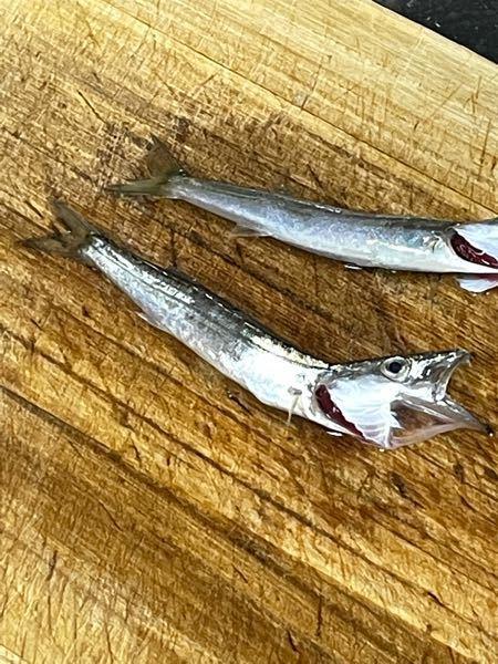 この魚知ってる人いますか?