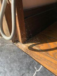 このような部屋の隅や角にできる蜘蛛の巣?のようなものはなんですか?