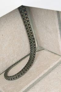 昨日の夕方、いきなりやってきて玄関に居座っています。 頭は見えないですが、ヘビの種類がいまいちわからないので対応に困っています。 よろしくお願いいたします。