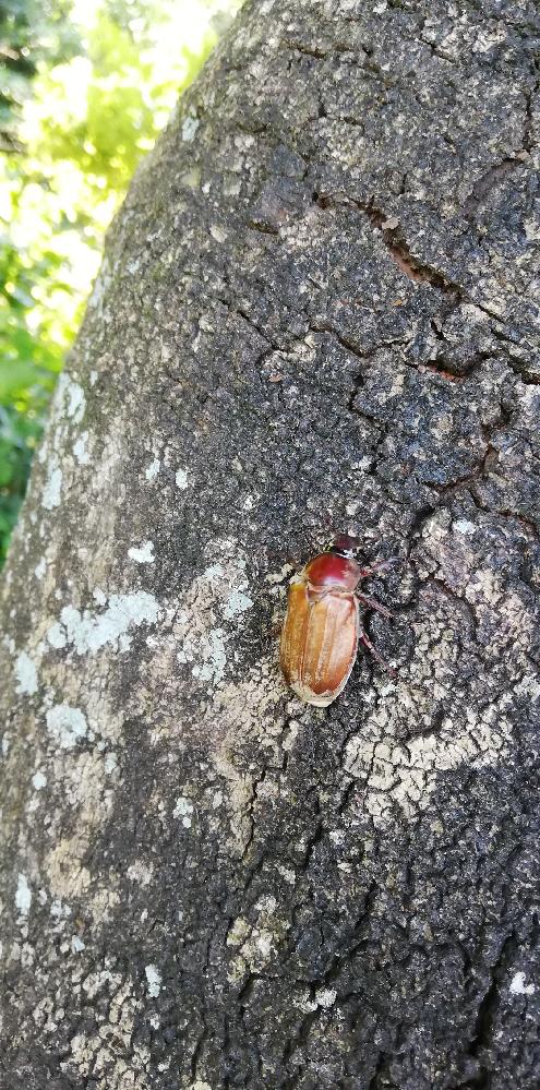 この昆虫がなにか分かりますか? 体長はおよそ3〜4センチ程度です。