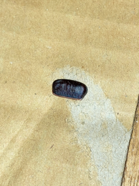 押し入れに画像の黒い物体が数個あったのですが何でしょうか?