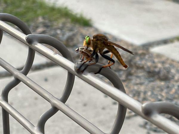 これは何の虫ですか?知ってる方教えてください