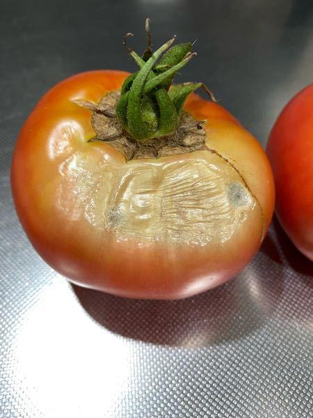 トマトをプランターで育てているのですが、実がこんなふうになってしまいました。何がいけないのでしょうか。