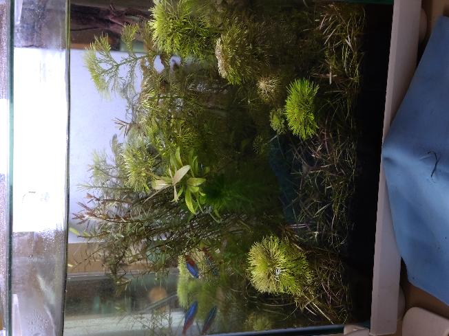 25cmキューブ水槽です。 水草が増え過ぎてこういう状態なのですが、 多過ぎますか?