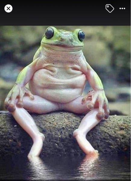 カエルの写真で、ちょっと現実にありそうにないポーズを取っている写真があるのですが、本物なのてじょうか?