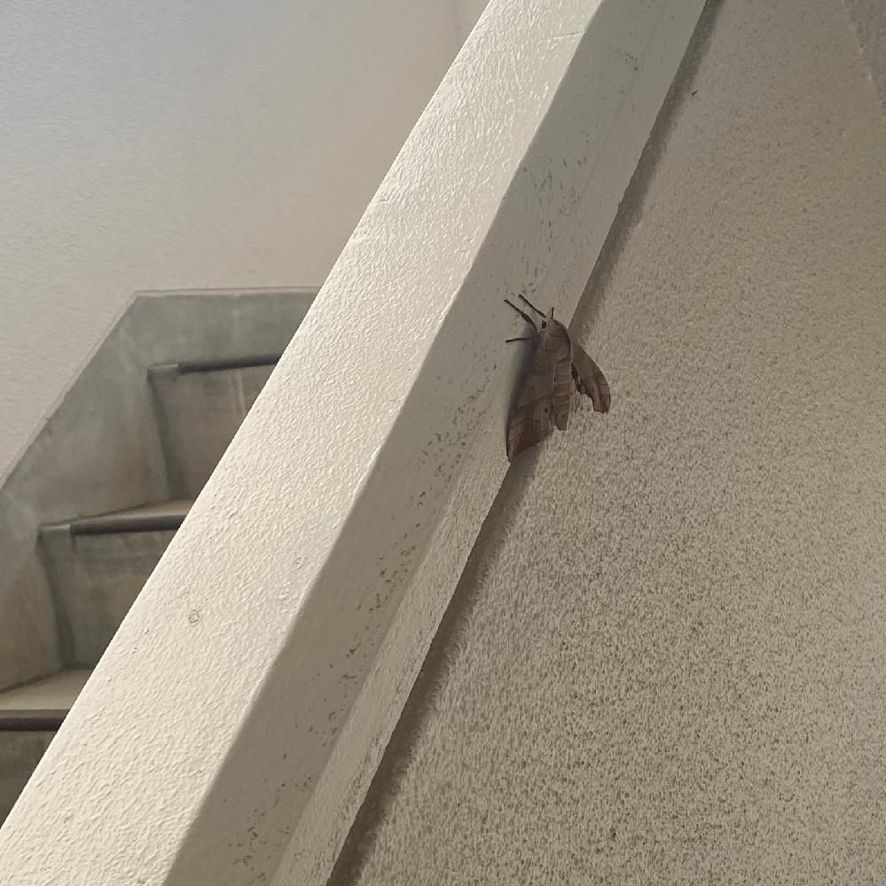 よくこいつもいるんですけどデカすぎてキモイです。なんて虫ですか?