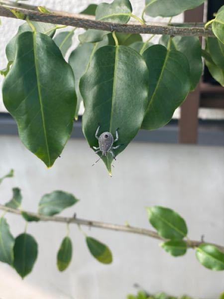 この虫の名前を教えて下さい。 8ミリ程の大きさでした。