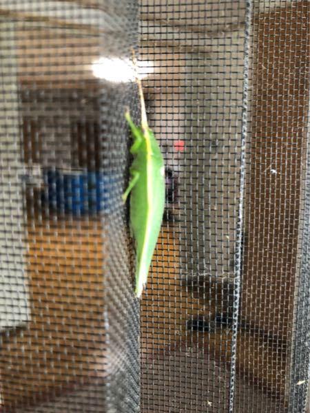 これなんて虫ですか!