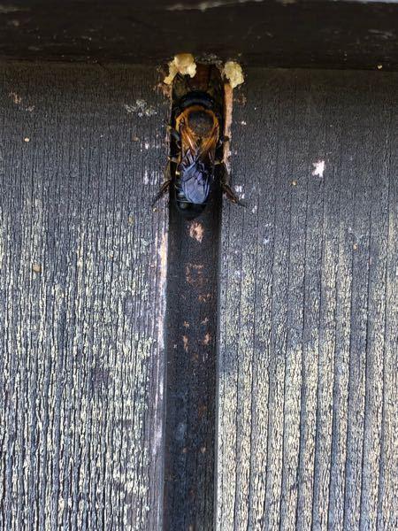 このハチの種類を教えてください。