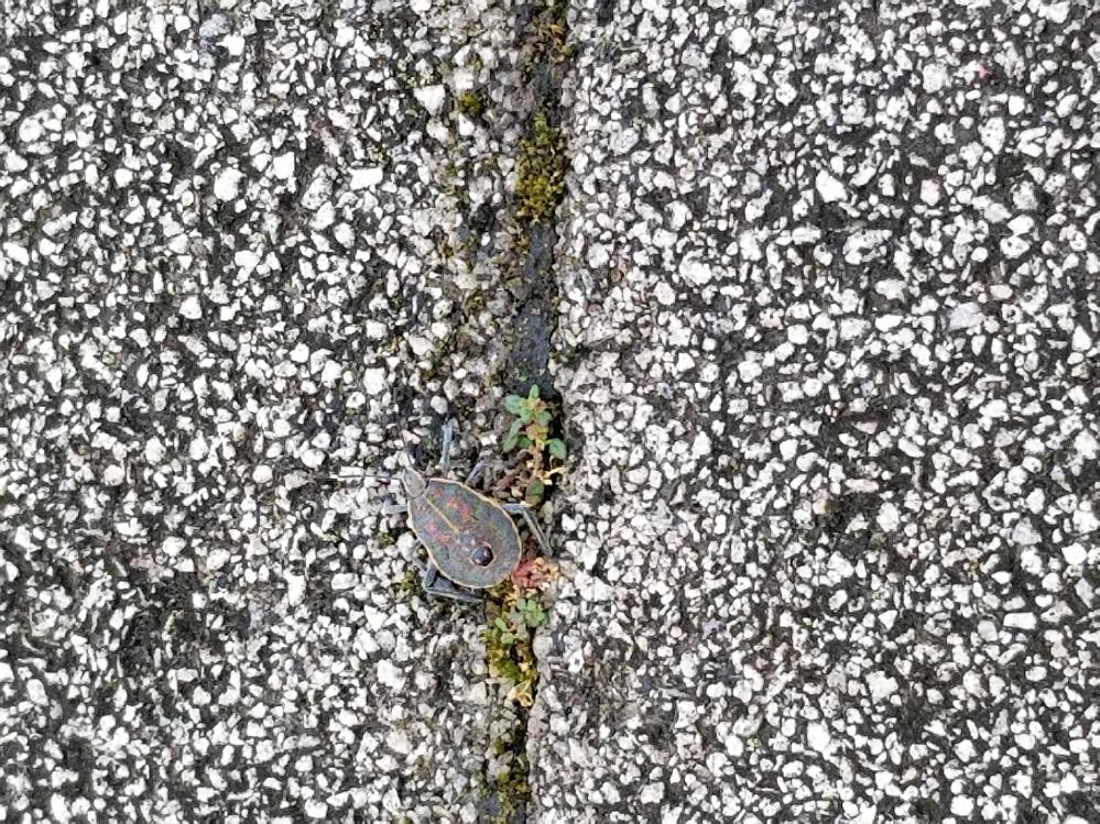外で見つけた虫なんですがなんて名前かわかる人いますか?