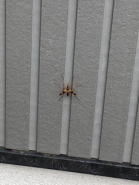 この虫は何ですか?こわいです
