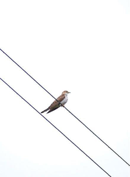 この鳥はなんですか?初めて見ました。詳しい方教えてください。