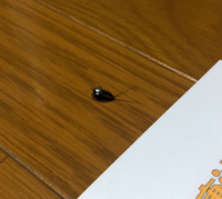 この虫はなんですか? ゴキブリの子供でしょうか? 白い点のようなものが背中にありました。 今月2匹目です。対策法がありましたら、教えていただきたいです。