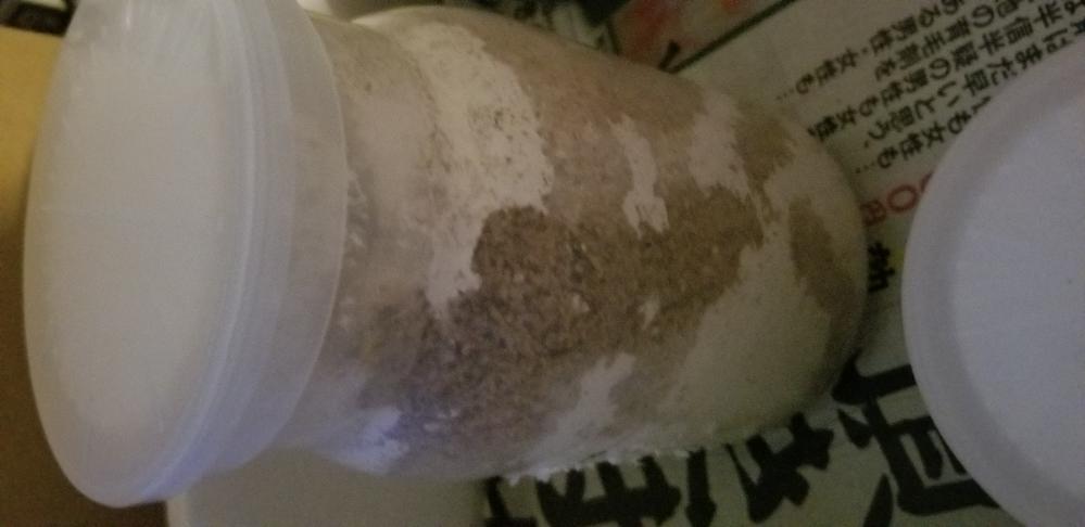 ニジイロクワガタ幼虫、おそらく3令幼虫の暴れについての質問です。 先日7月22日昼に、ペットショップでニジイロクワガタ幼虫を購入し、その日の夜にフジコンのバイオ菌床ボトル(440ml)に入れ替えをしました。(購入時は穴が空いたブリードカップに、発酵マットの中に入っていました。) その翌日の朝に様子を見てみると、添付画像と同じような状態で、特に黒くなっているということも無かったため、暴れている様子でした。 ですが当方、クワガタの幼虫飼育は初めてだったため、エサを元気に食べていると思いこみ、翌日に、フジコンのバイオ菌床ボトル(1.1L)の同種類、大きめのボトルに入れ替えました。 暴れは収まらず、画像のように、上から下に移動しています。たまに、腹筋運動の様に周りを固めて、蛹室を造る?様な動きもしています。 ですが、たまに耕したオガを足で口にもっていき、食べているような動きもしているように見えます。 幼虫の色は、出していないため詳しくは分からないのですが、少しだけ黄色味を帯びているような気もします。とても黄色というわけではありません。少しまだ、フンと思われる黒い色も見えます。 説明が長くなってしまいました。以上の状況から、暴れの原因は何でしょうか? 調べてみたところ、フジコンのボトルは、上部に穴が空いており、酸欠になる可能性は低いということ、また、上部には移動していますが、表面には出てきていないため、個人的には酸欠が暴れの原因である可能性は低いかなと思っています。 ただ1つ、思い当たる点としては、菌糸ビン入れ替え時に、環境を合わせると言う意味で、5時間以上は幼虫を置いている同じ場所にボトルを置いておいたのですが、特にガス抜きの作業はしていないということです。 菌糸の発酵による温度上昇は、ボトルを外から触ってみても、特に熱を感じなかったため、こちらも可能性は低いかと思います。 他に思い当たる原因は何かあるでしょうか? 個人的には蛹になる前段階の暴れだと思っていますが、、、 それであれば、マットへの入れ替えをするかどうかも悩んでいます。 暴れと見られる動きがあった後、既に1度入れ替えをしているので、幼虫の体力消耗が気になるためです。 長くなってしまってすみません。 まとめますと、暴れの原因と、その原因に対する対処に悩んでいます。 また、ニジイロクワガタの暴れはひどいということは分かっているのですが実際どのぐらいひどいのでしょうか?(日数の目安など) お早めにご回答頂けると幸いです。よろしくお願いいたします。