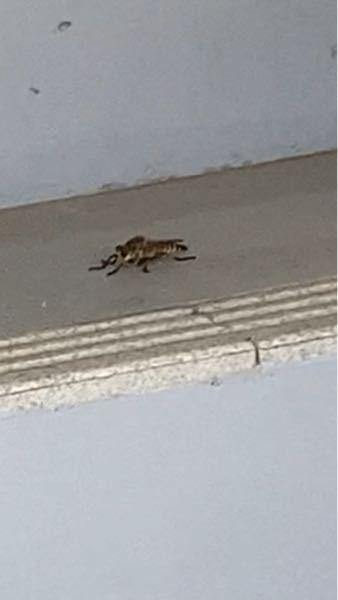 この虫ってなんですか?!初めて見たんですけど。