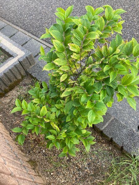 これはなんという植物ですか? どれくらいの大きさになるでしょう?