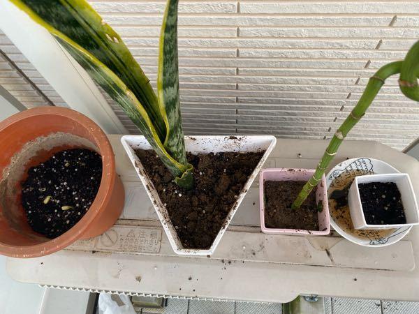 最近、ベランダで植物を育てはじめました。 妹からもらった植物なんですが名前がわかりません。 左から2番目と3番目のやつです。