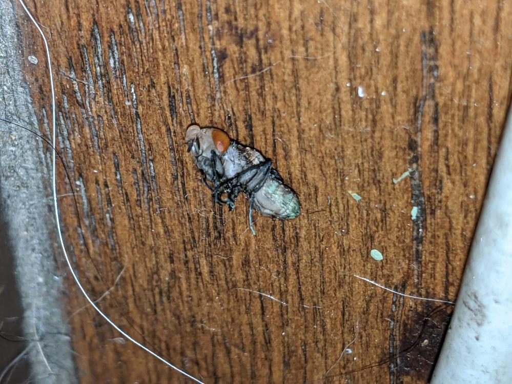 【グロ注意】 この虫はなんですか?