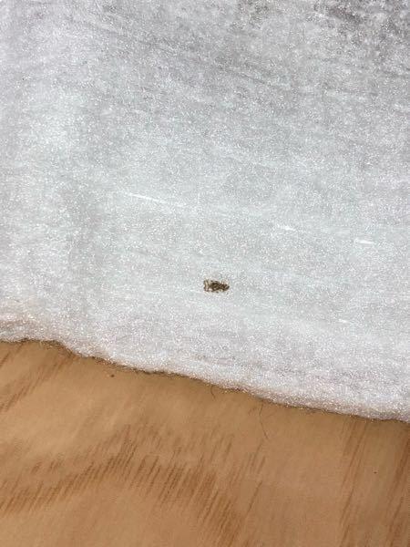 この虫は一体なんでしょうか?