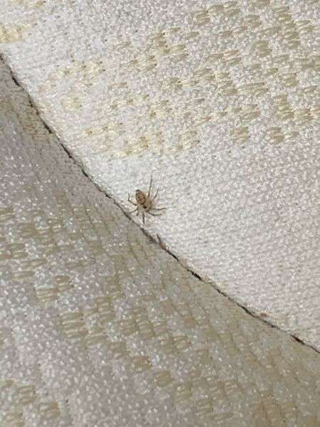 このクモは何というクモですか?