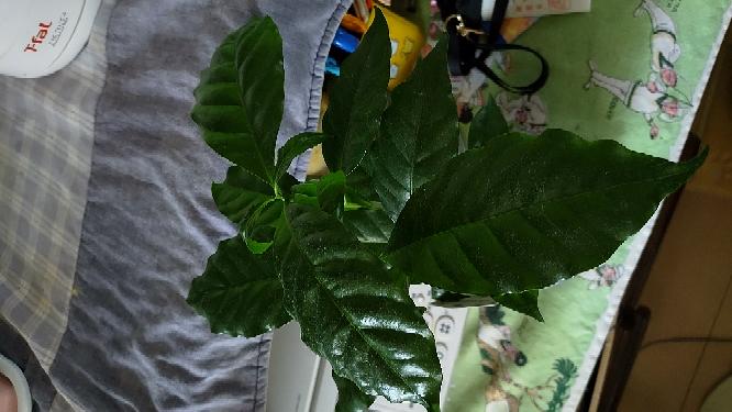 この観葉植物は、何という名前ですか?