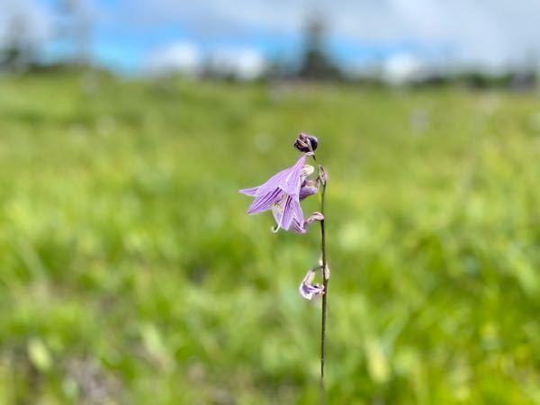 この花の名前をおしえてください