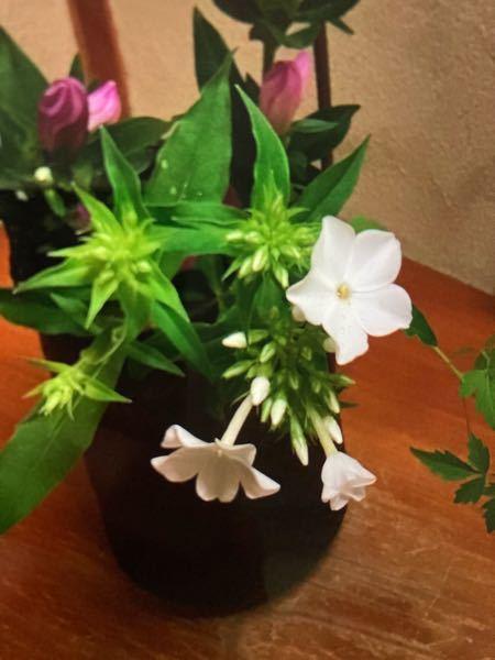 この白い花の名前を教えて頂きたいです。