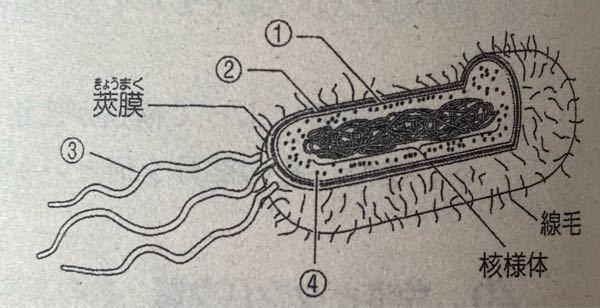 高1生物です 細菌 分かる方教えて下さい!!