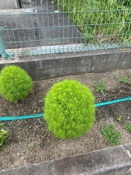 この植物って何ですか?